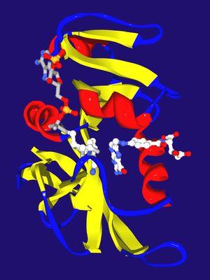 Enzyme kinetics - Wikipedia, the free encyclopedia