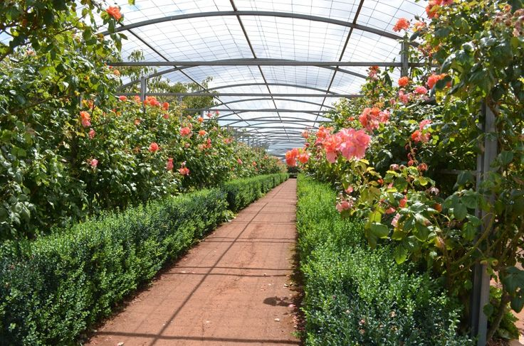 The Tasmanian national rose garden on Woolmers Estate is beautiful http://blog.moretas4less.com/national-rose-garden-woolmers-estate/