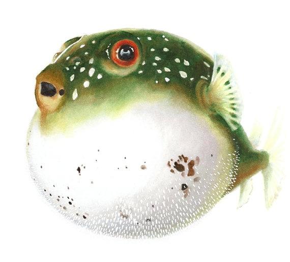 17 best images about art on pinterest original art for Puffer fish art