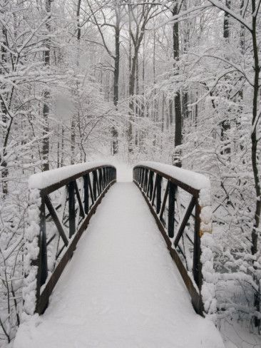 A View of a Snow-Covered Bridge in the Woods, by Richard Nowitz