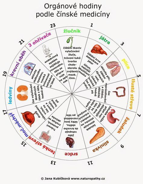 Teorie našich orgánových hodin vychází zprastaré čínské filosofie 12 meridiánů – energetických systémů, které jsou zodpovědné za...