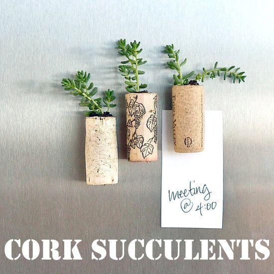 Cork succulent magnets!
