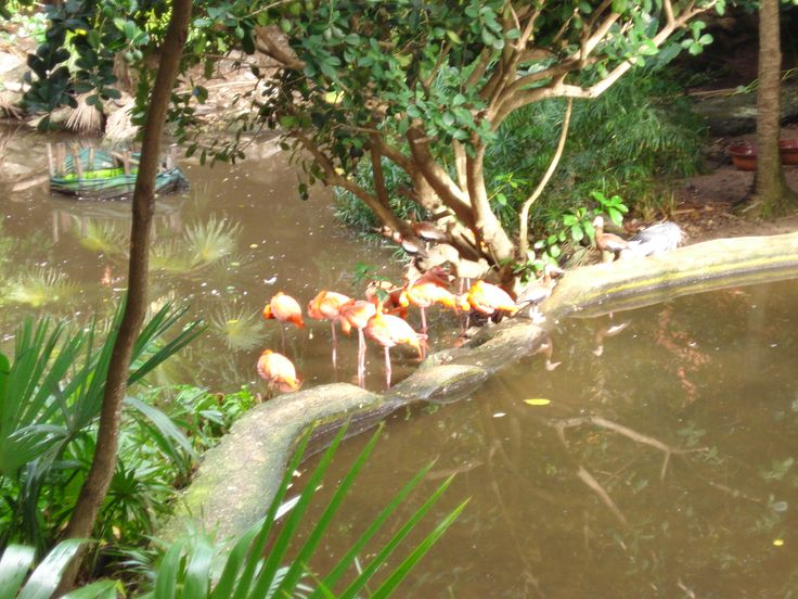 Mexico, flamingo's