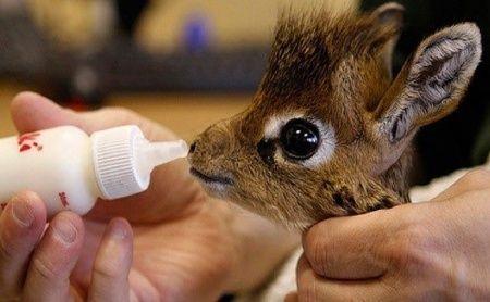 Baby giraffe OH. MY. GOSH
