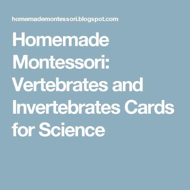 Homemade Montessori: Vertebrates and Invertebrates Cards for Science