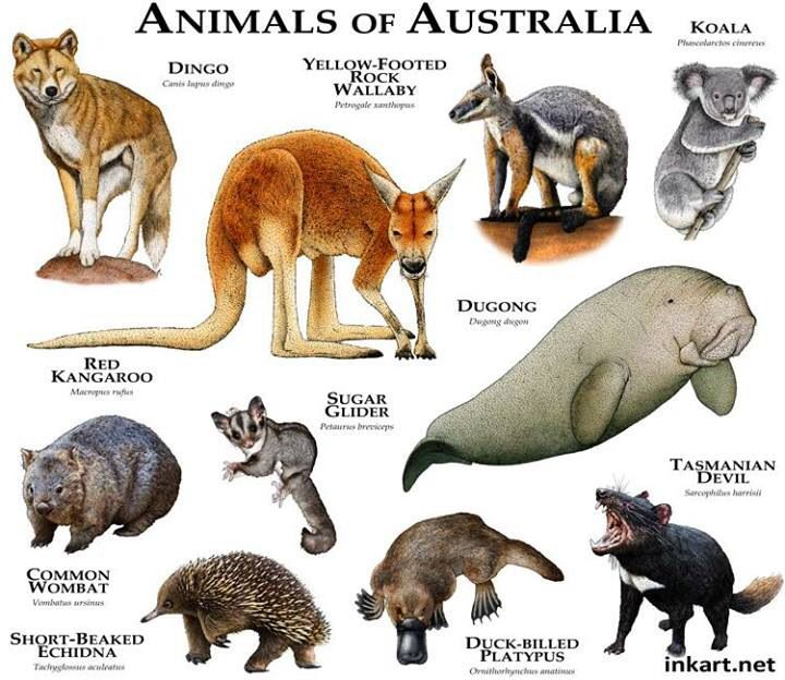 the strange animals of australia Tasmania is a natural haven for australian wildlife with many animals and plants found no where else on earth.
