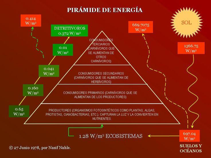 piramide de energia - Buscar con Google
