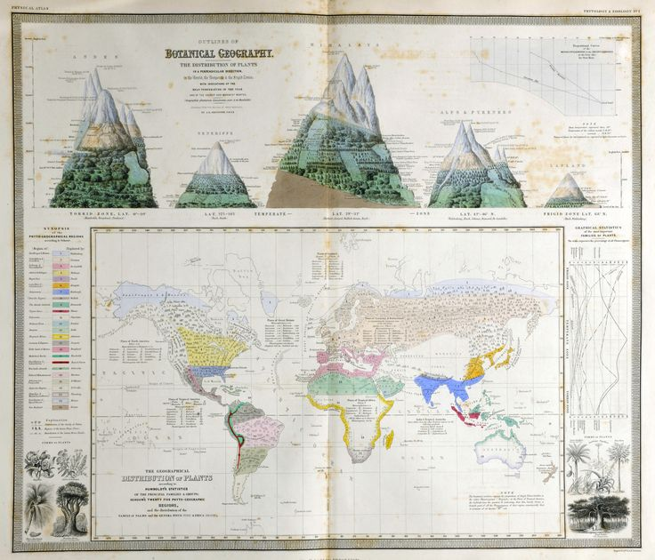 "~ ""Outlines of Botanical Geography"" and ""The Geographical Distribution of Plants."" Engraved map and illustrations within one border, with added color. From Johnston's The Physical Atlas (1849)"