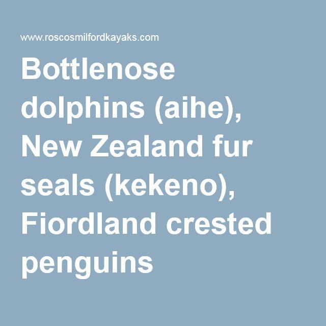 Bottlenose dolphins (aihe), New Zealand fur seals (kekeno), Fiordland crested penguins
