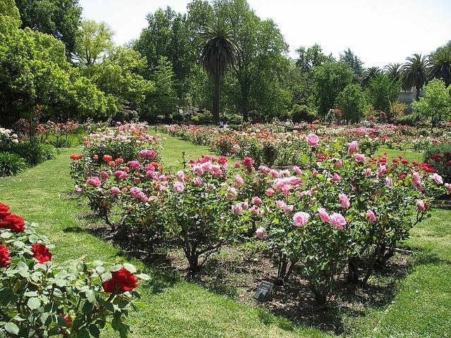 McKinley Park Rose Garden. Sacramento, CA | Favorite Places | Pinterest |  Park And Weekend Getaways