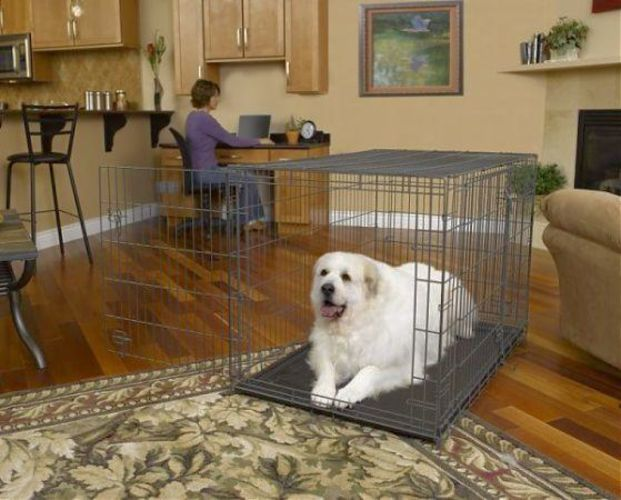 Giant Dog Crate Brand New No Diseases In 2020 Dog Crate Giant Dogs Discount Pet Supplies