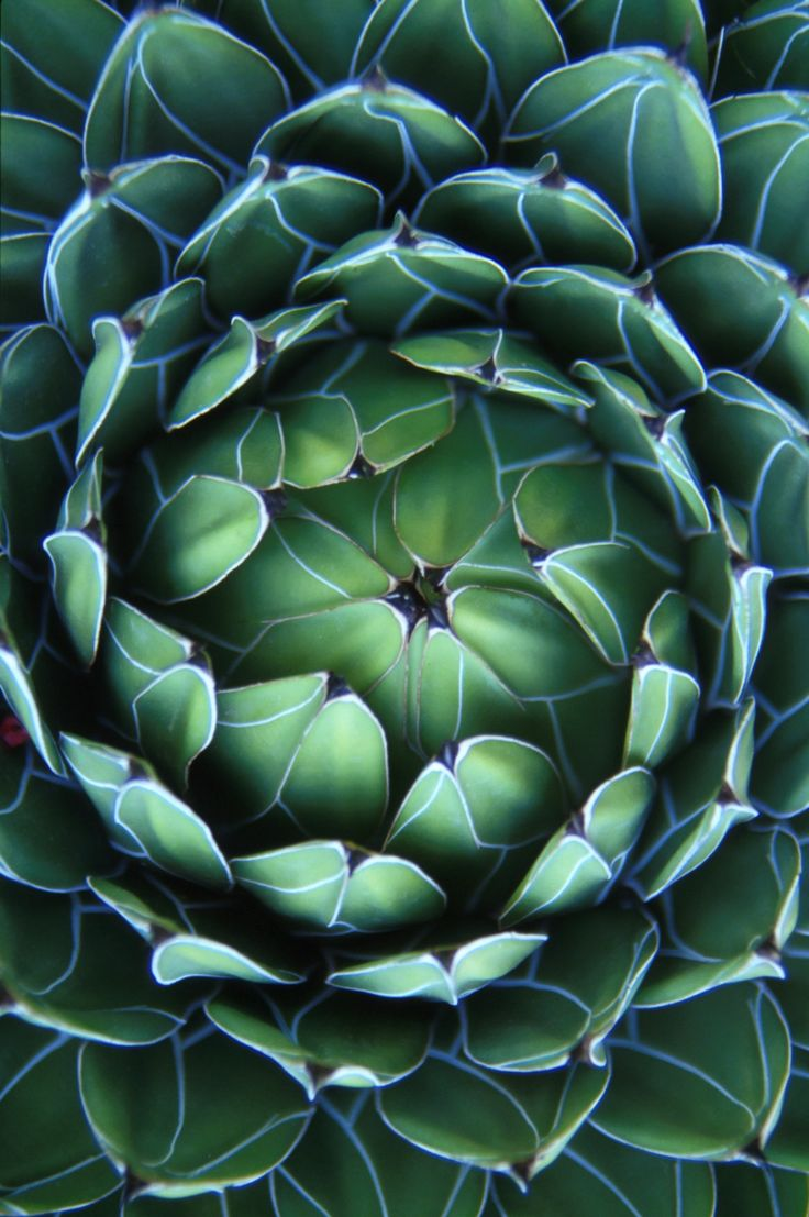 Succulent from the Monaco Arboretum by Travis Ball on 500px