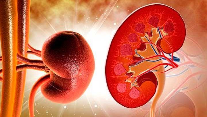 Muchos no saben la verdadera importancia de mantener limpios y saludables nuestros riñones y la cantidad de enfermedades se originan en el sistema urinario. Por eso aquí te facilitamos la forma de mantener al día tus riñones.