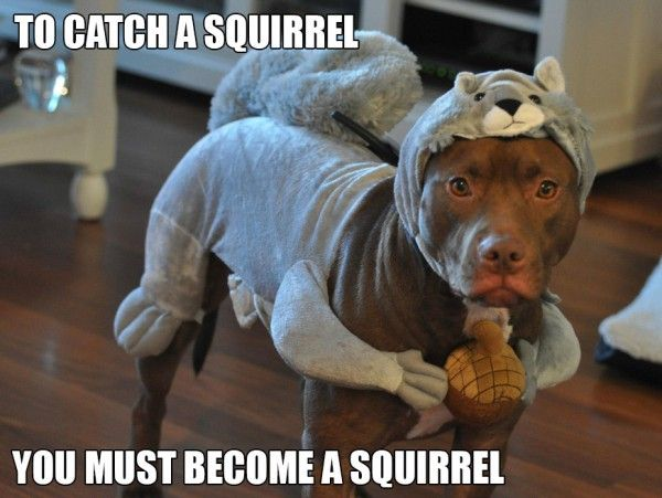 funny pitbulls | Epic Pix » Like 9gag – just funny. » Dangerous Pitbull