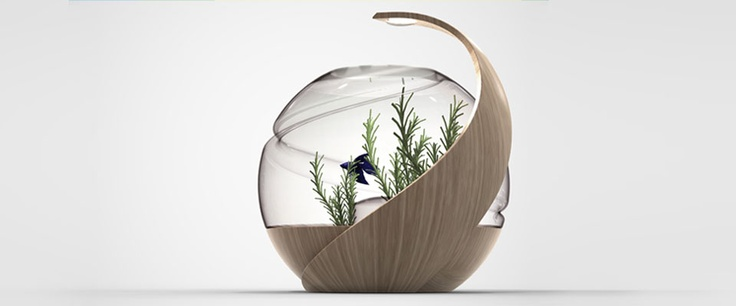 17 best images about betta fighter fish tank ideas on for Avo fish tank
