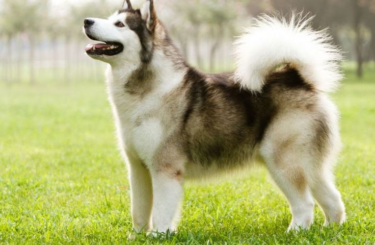 Most Expensive Dog Breeds in The World http://ift.tt/2prZYC1