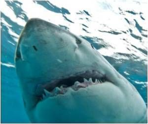 Teeth of sharks contain fluoride - an active component of most toothpastes and dental care mouthwashes. Who knew? www.altmandental.com