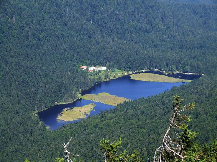 Kleiner Arbersee - direkter Blick vom Großen Arber - Плавучий остров — Википедия
