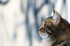 Katze, Katzen, Haustier, Tier, Häuslich