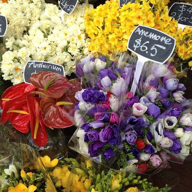 Gorgeous blooms at Vic Market