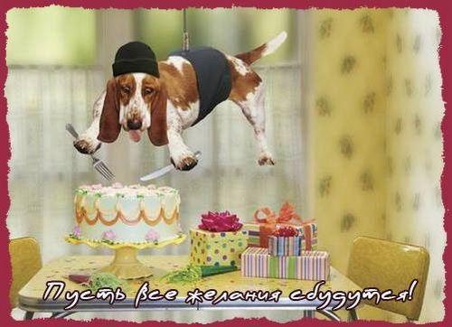 Собака которая зависла над тортом