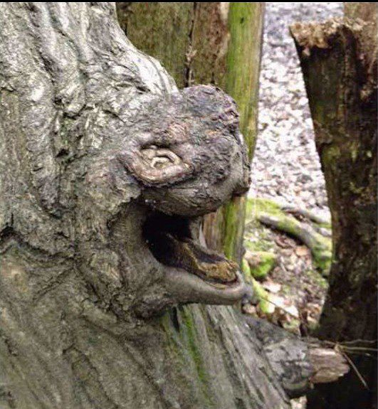 Stefanie Theodorou saw this tree while cycling through a wood in Cuffley, Hertfordshire. Photo: Fortean times.