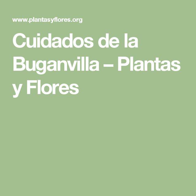 Cuidados de la Buganvilla – Plantas y Flores