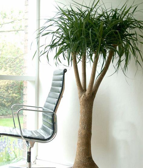 Ter plantas de interior em casa tem muitas vantagens, não só renova e purifica o ar, como também reduz o pó 20% (aposto que esta não sabia...