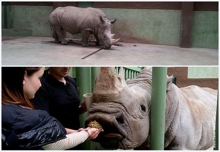 животные зоопарка 12 месяцев фото