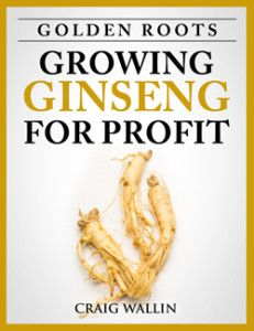 Ginseng is one of the most popular, and most profitable, herbs in the world. It's fairly easy to grow too. In just a few years' time, you can have a successful ginseng growing business. Here's how: Ginseng's popularity is nothing new. It's certainly not a fad. In fact, ginseng has been popular for hundreds and …