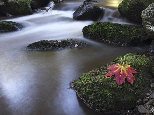"Autumn sunset at ""Hamersky"" stream in the Sumava mountains, Czech Republic ~"