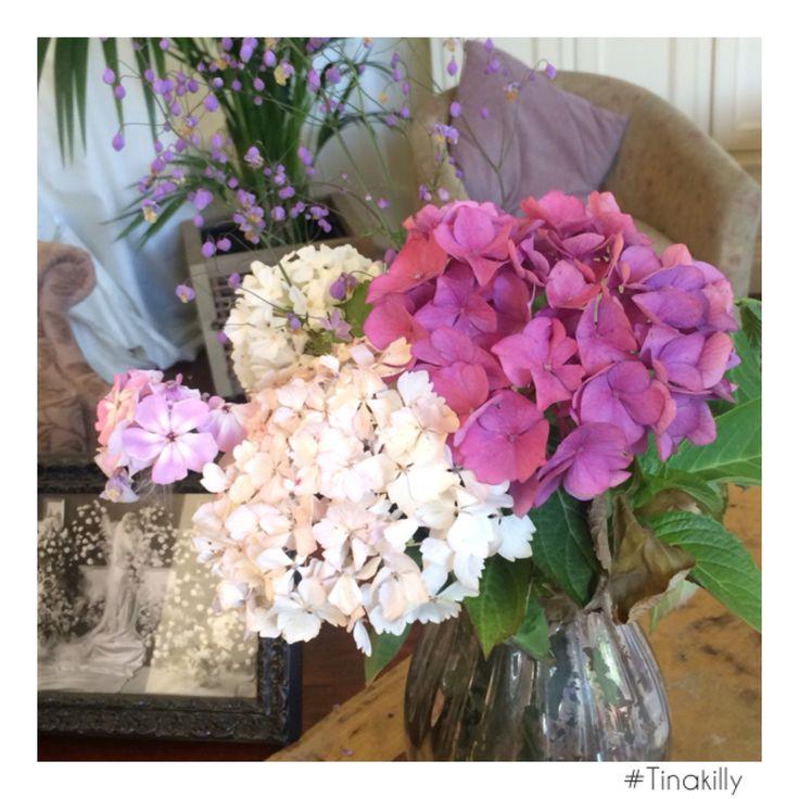 A #hydrangea moment @tinakilly_country_house_hotel #Tinakilly #hydrangealove #flowerstagram