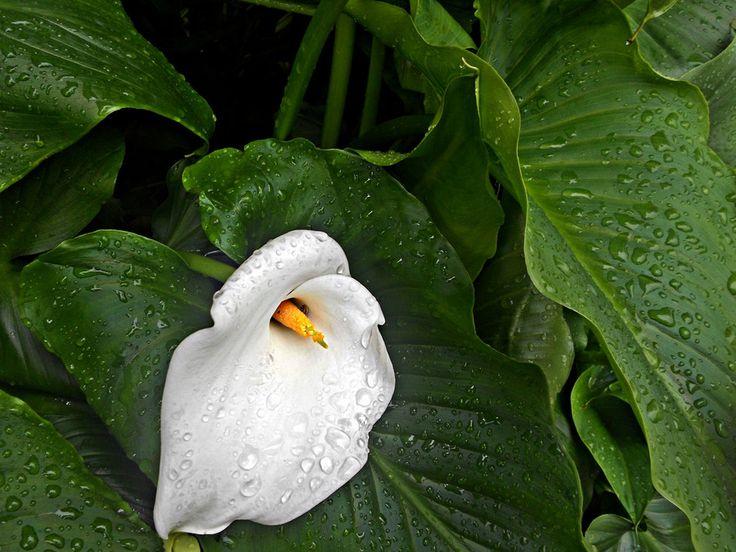 Rainy May by Marilena Vaccarini on 500px
