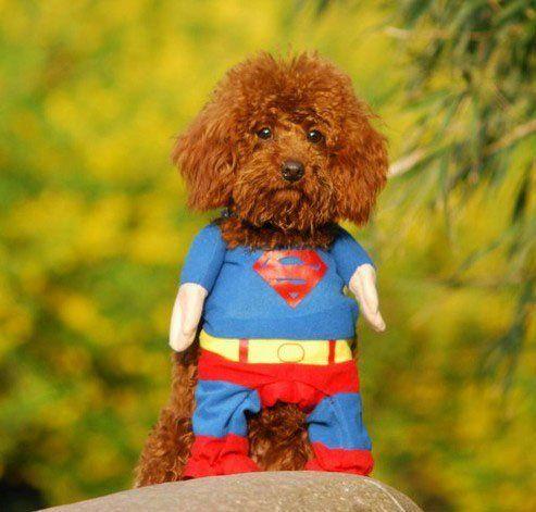 disfraz de superman para perro                                                                                                                                                                                 Más