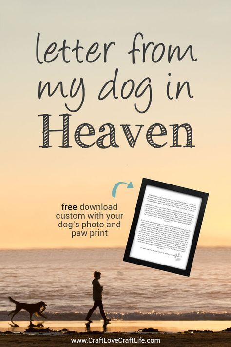 letter from heaven pinterest pet loss rainbow bridge and pet pet