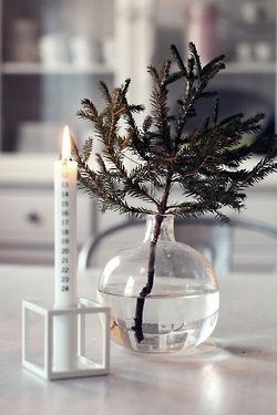 pine in a vase. could be cool with a few cranberries or something floating in the vase as well.