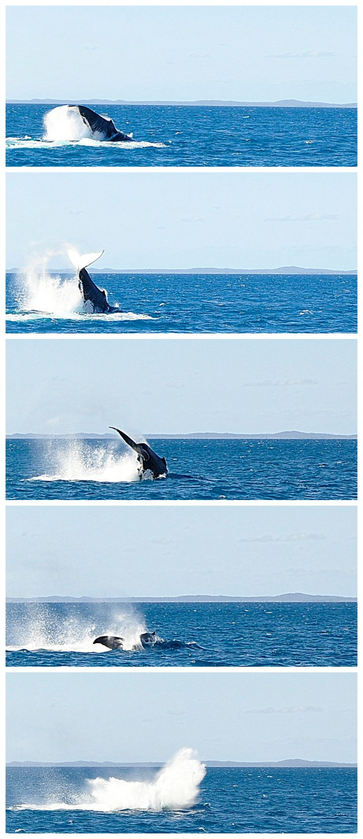 Humpback Whale watching at Hervey Bay - Fraser Coast - Queensland - great for a family holiday