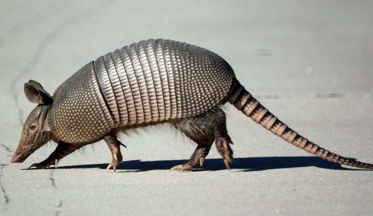 """It's one of them """"Florida hard shell posssums""""....hell I thought they only lived in Texas, Arizona and Mexico til I moved to Florida! Lmaoooo"""