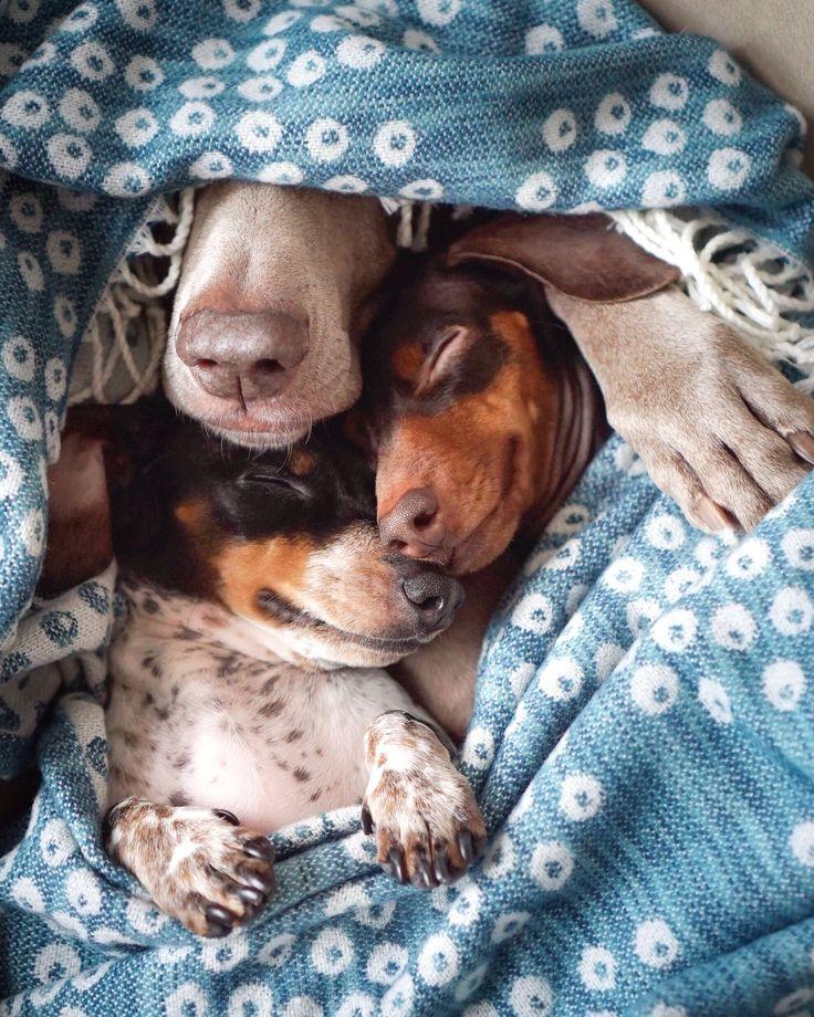'Zzz, Zzz, Zzz' - Reese, Harlow & Indiana Sleeptime