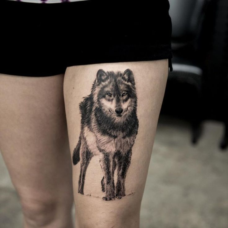 Hyper Realistic Wolf Tattoo Done In Black & Gray