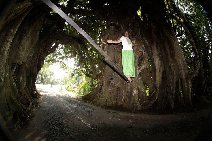 Big Tree close to #Medewisurfhomestay