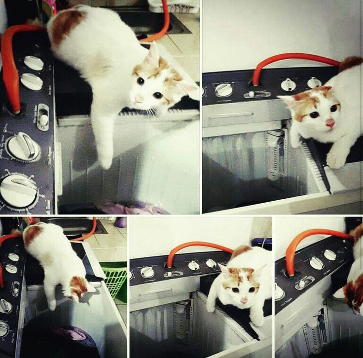 I❤😻 #ilovecats #cutecat #catlovers #pecintakucing #penggemarkucing
