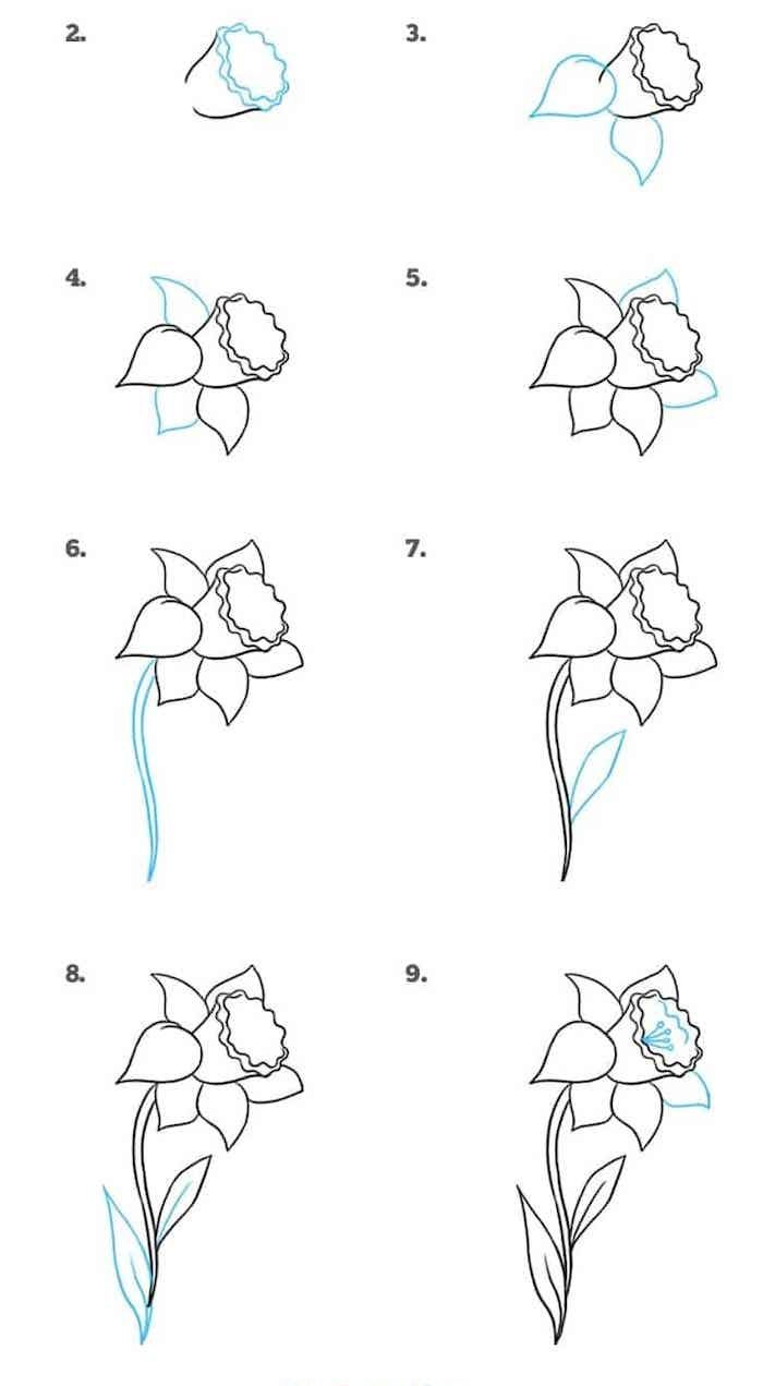 How To Draw A Daffodil Step By Step Drawing Diy Tutorial White Background In 2020 Cute Flower Drawing Flower Drawing Tutorials Flower Drawing