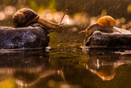 Raining  Photo by kutub uddin — National Geographic Your Shot