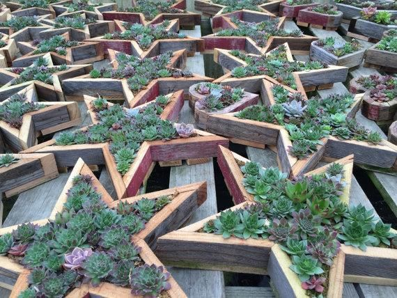 Succulent Star Vertical Garden Kits Planter Cuttings