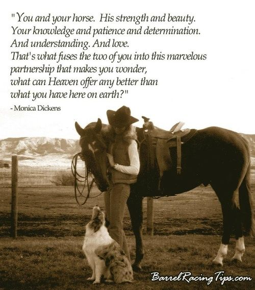 horse quotes inspirational | Horse Quotes & Inspiration | We Heart It