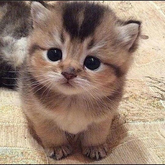 (notitle) – süße Katzen