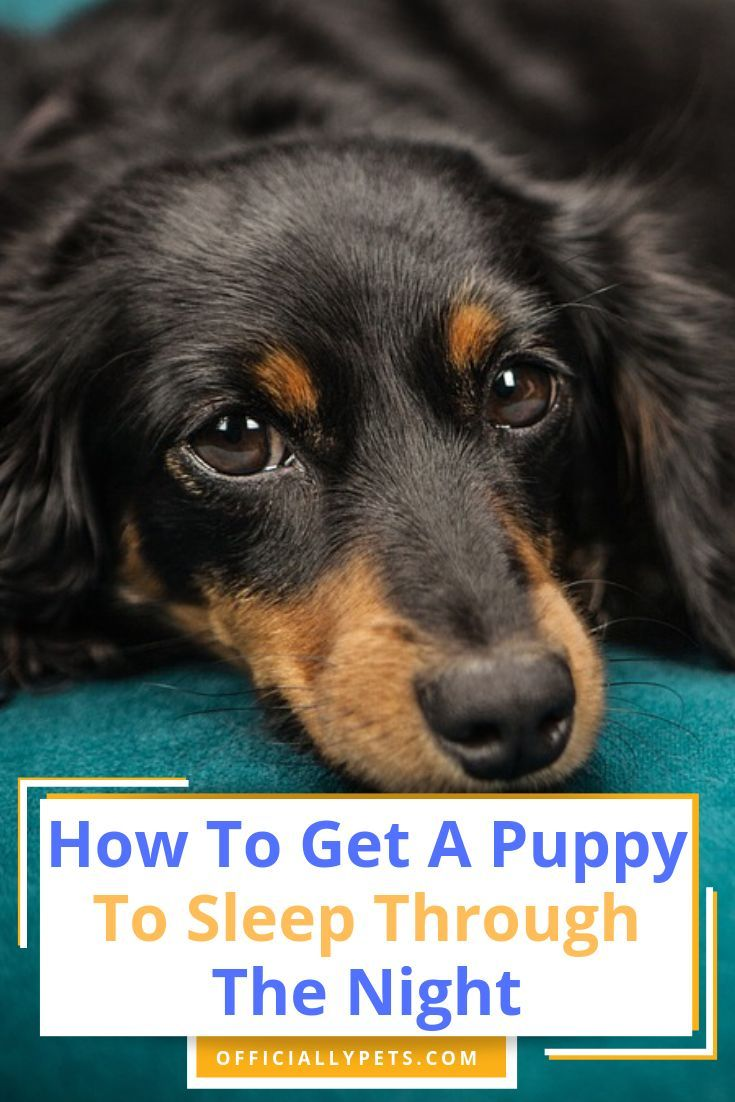 How To Get A Puppy To Sleep Through The Night Our Top