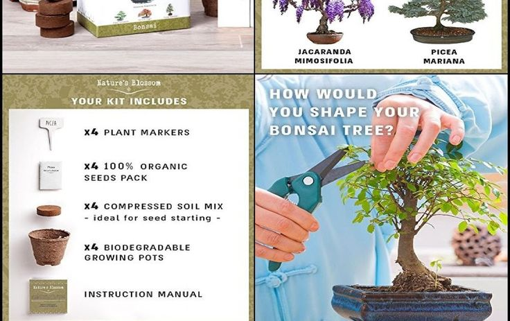 Japanese Bonsai Tree Plant Seed Starter Kit 4 Bonsais Indoor Decoration Garden