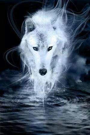 White Wolf Art